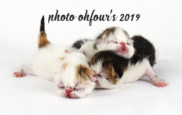 OhFour's babies from previous litter (2019)